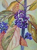 Beautyberry Bush 2