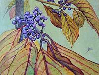 Beautyberry Bush 3